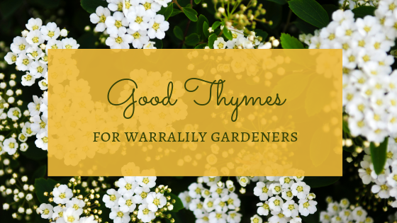 Good thymes for Warralily Gardeners
