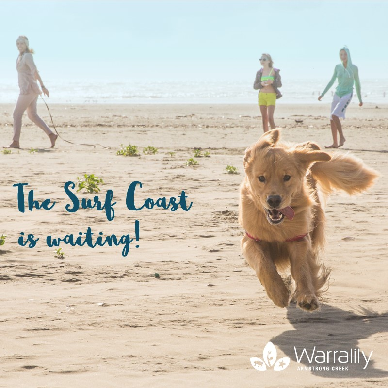 The Surf Coast is waiting at Warralily
